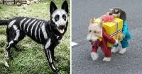 Funny Dog Halloween Costumes - Hot Girls Wallpaper