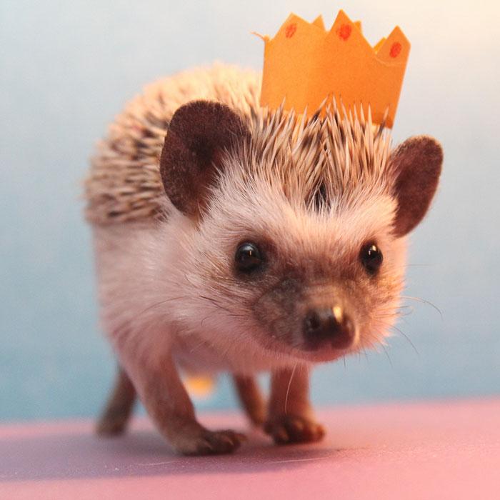 Cute Baby Hedgehog Wallpaper 10 Adorable Hedgehog Pics To Celebrate Hedgehog Day
