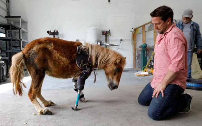 3d Name Live Wallpaper App Pony Stands On Her Feet For The First Time With Prosthetic