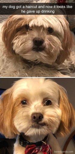 Small Of Dog Meme Avi