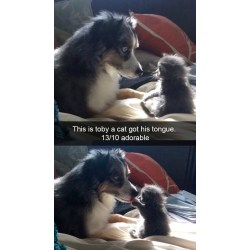 Small Crop Of Funny Dog Pictures With Captions