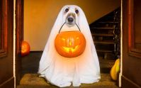 13 Adorable Dogs In Ghost Costumes | Bored Panda