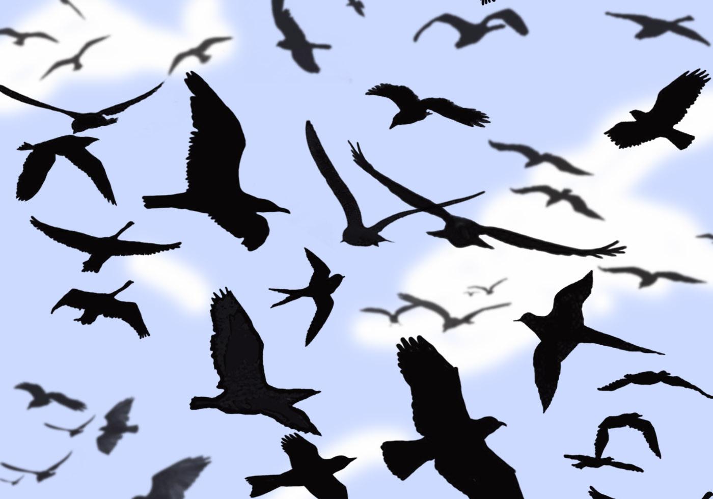 Car Radio Wallpaper Twenty One Pilots Bird Photoshop Brushes Free Photoshop Brushes At Brusheezy