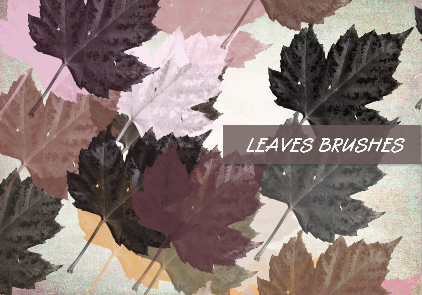 High Resolution Wallpaper Fall Leaves Ps Leaves Brushes Set