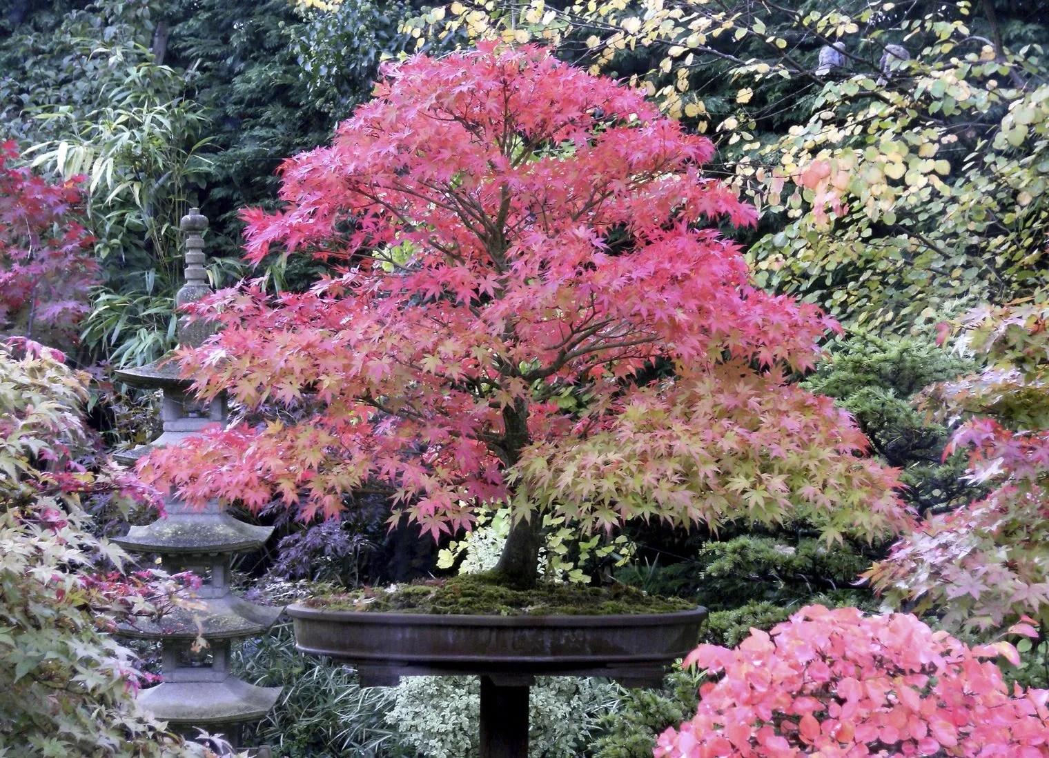 Arbre Jardin Japonais | Quelques Arbres De Tokyo Japon Les Têtards ...