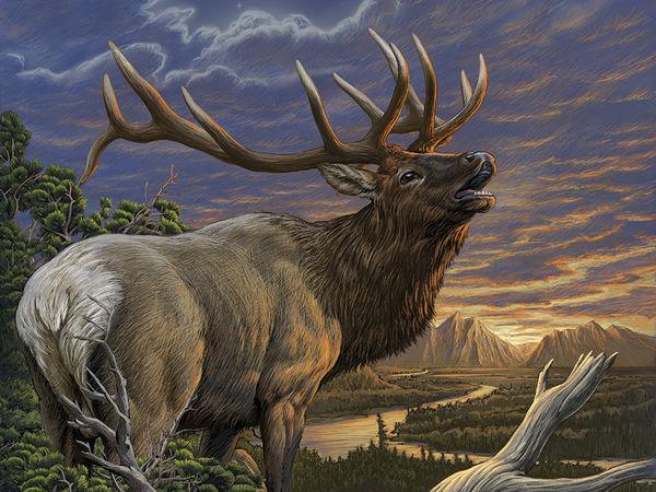 Elk By Dimitar Neshev Decalgirl
