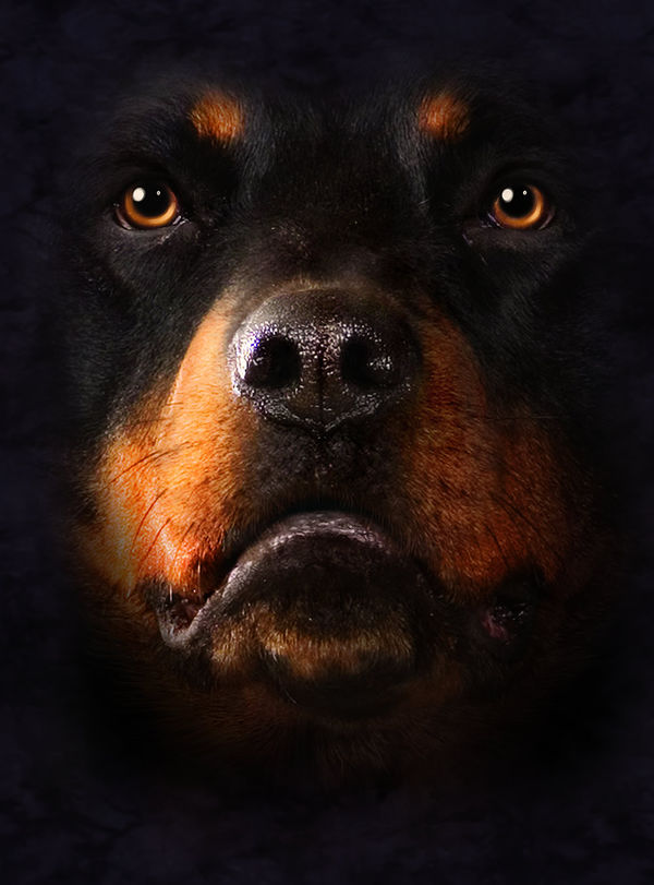 Cute Girl Face Desktop Wallpaper Rottweiler By The Mountain Decalgirl