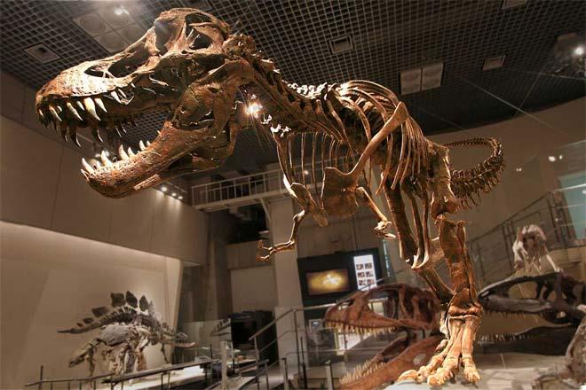 Allosaurus Vs Tyrannosaurus Difference And Comparison