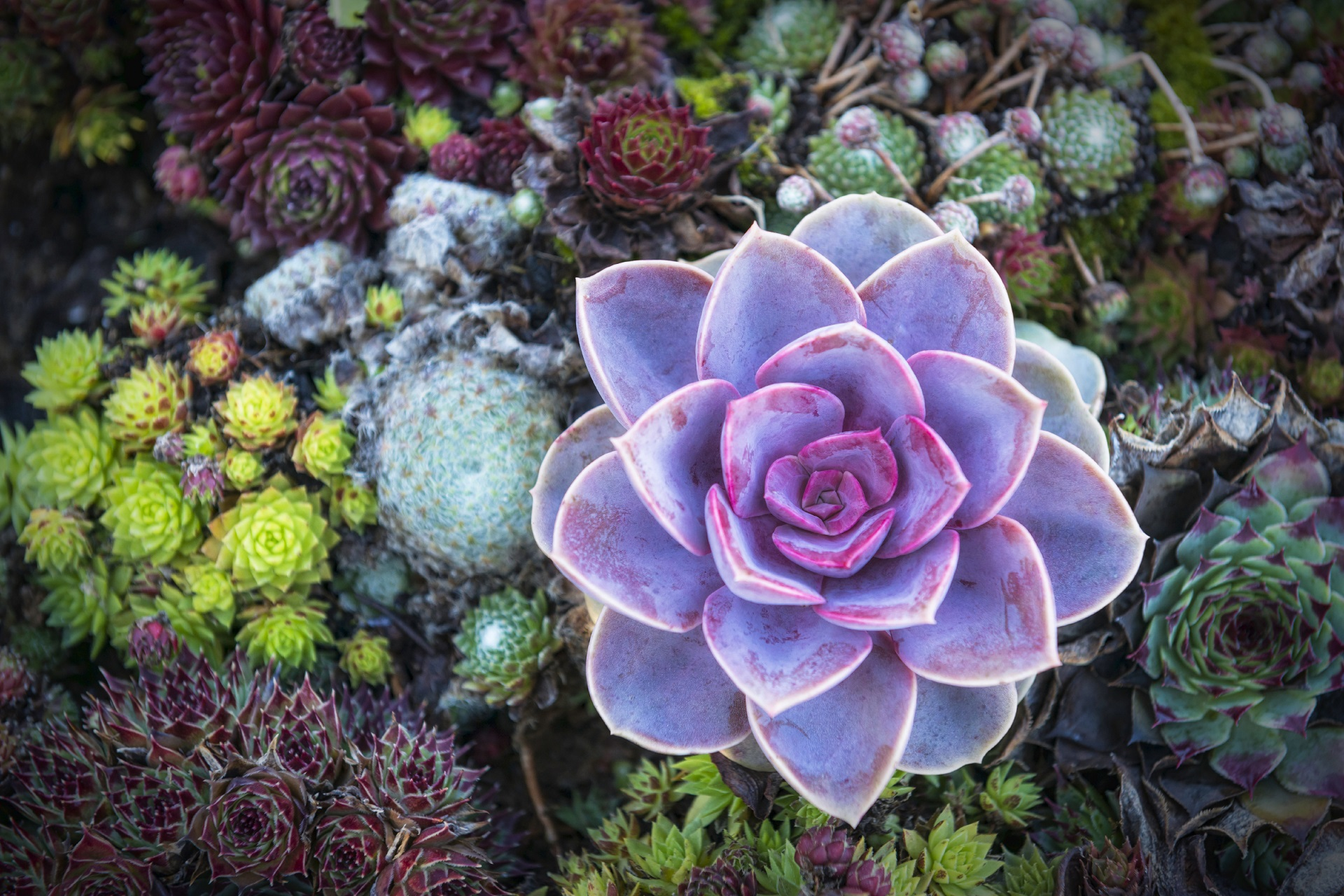 Succulent Brisbane Successfully Growing Succulents