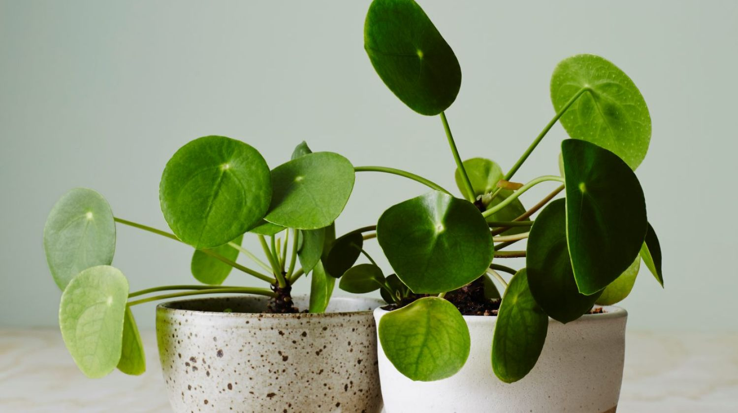 Indoor Small Plants How To Buy The Right Indoor Plants For Your Home