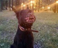 Werewolf Dog Muzzle   DudeIWantThat.com