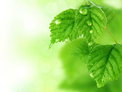 Iphone Wallpaper Icon Template Green Leaf Background 01 Hd Pictures Free Download