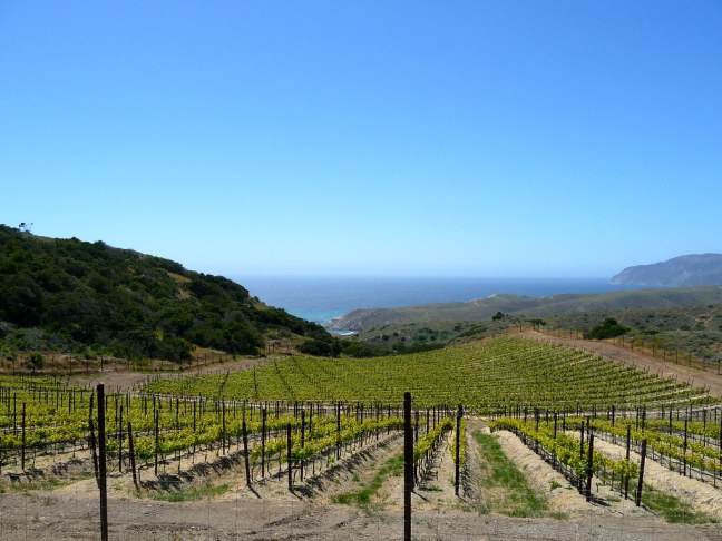 Vineyards of Catalina Island