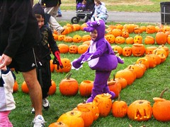 Barney in a Pumpkin Maze