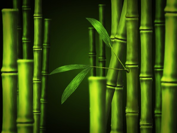 psd_bamboo_background