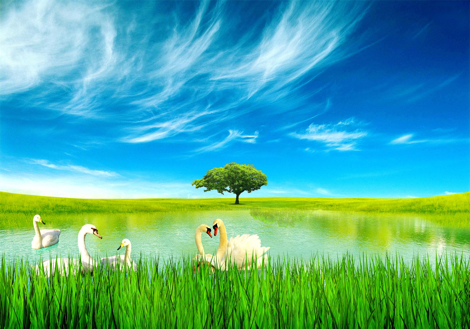 background photo nature