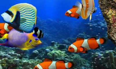 Free 3d HD Live Fish Wallpaper APK Download For Android | GetJar