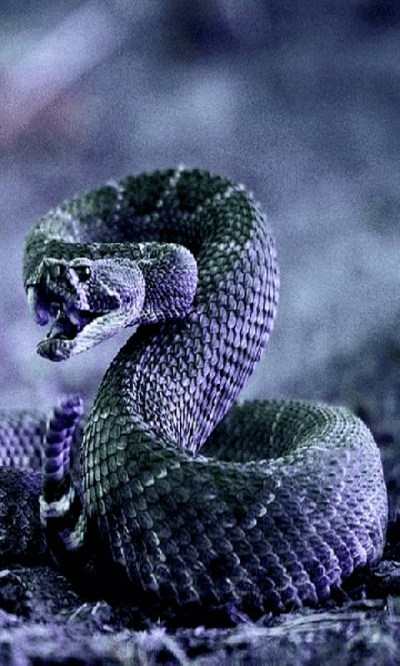 Free Cobra Snake Live Wallpaper APK Download For Android | GetJar