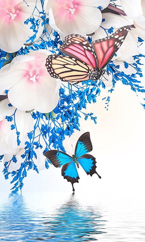 Cute Wallpapers Cocoppa Free Butterfly Wallpaper Hd For Android Apk Download For