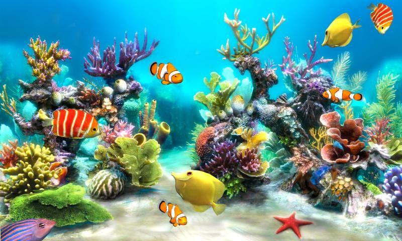 Fighter Fish Hd Wallpaper Download Free Hd Fish Live Wallpaper Live Fun Apk Download For