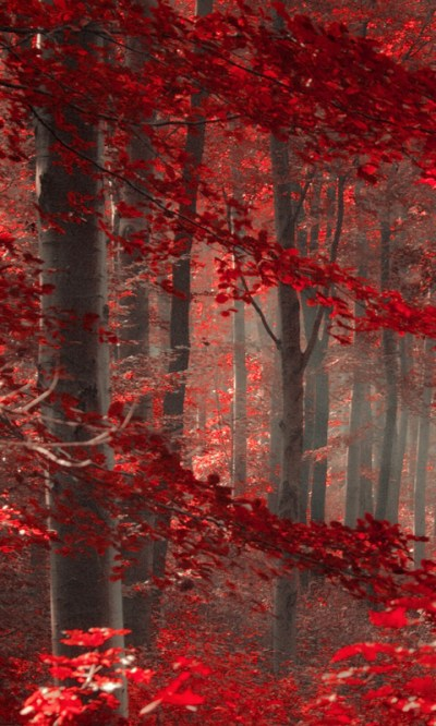 Free Enchanted Forest Live Wallpaper APK Download For Android   GetJar