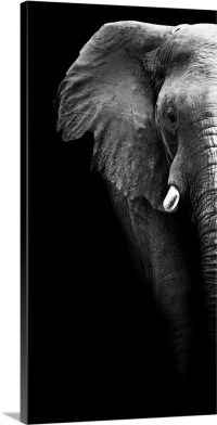 Elephant - Black and White Wall Art, Canvas Prints, Framed ...