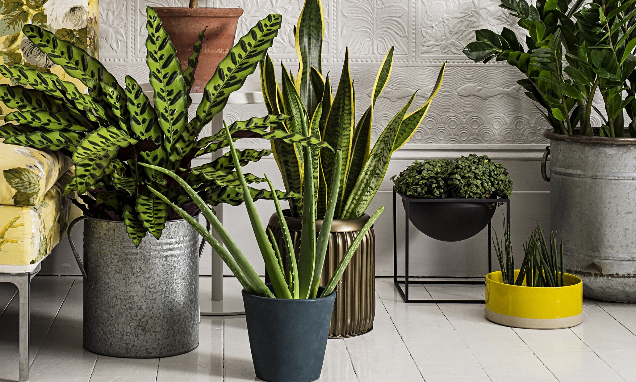 Plant In House How To Make The Most Of House Plants Life And Style