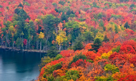 New England Fall Themed Wallpaper Ideas For Autumn Activities And Food Themed Breaks