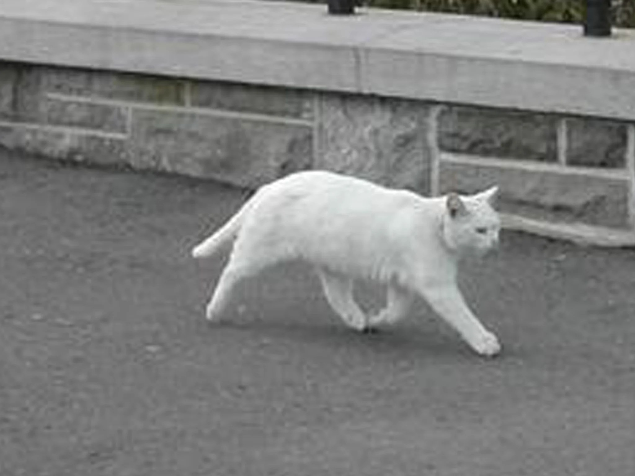 Cat 2048 Revealed The Half Cat Not Created By Google Street View The
