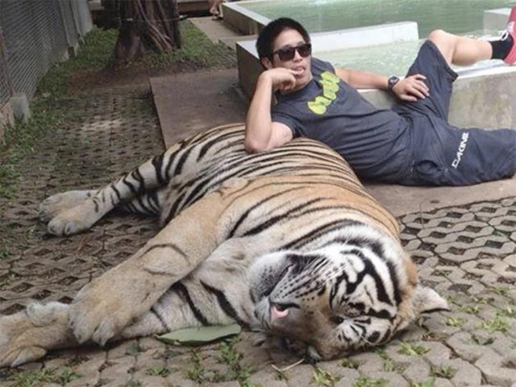 Exotic Cars Wallpaper Pack Stop Taking Tiger Selfies That Fund Animal Abuse