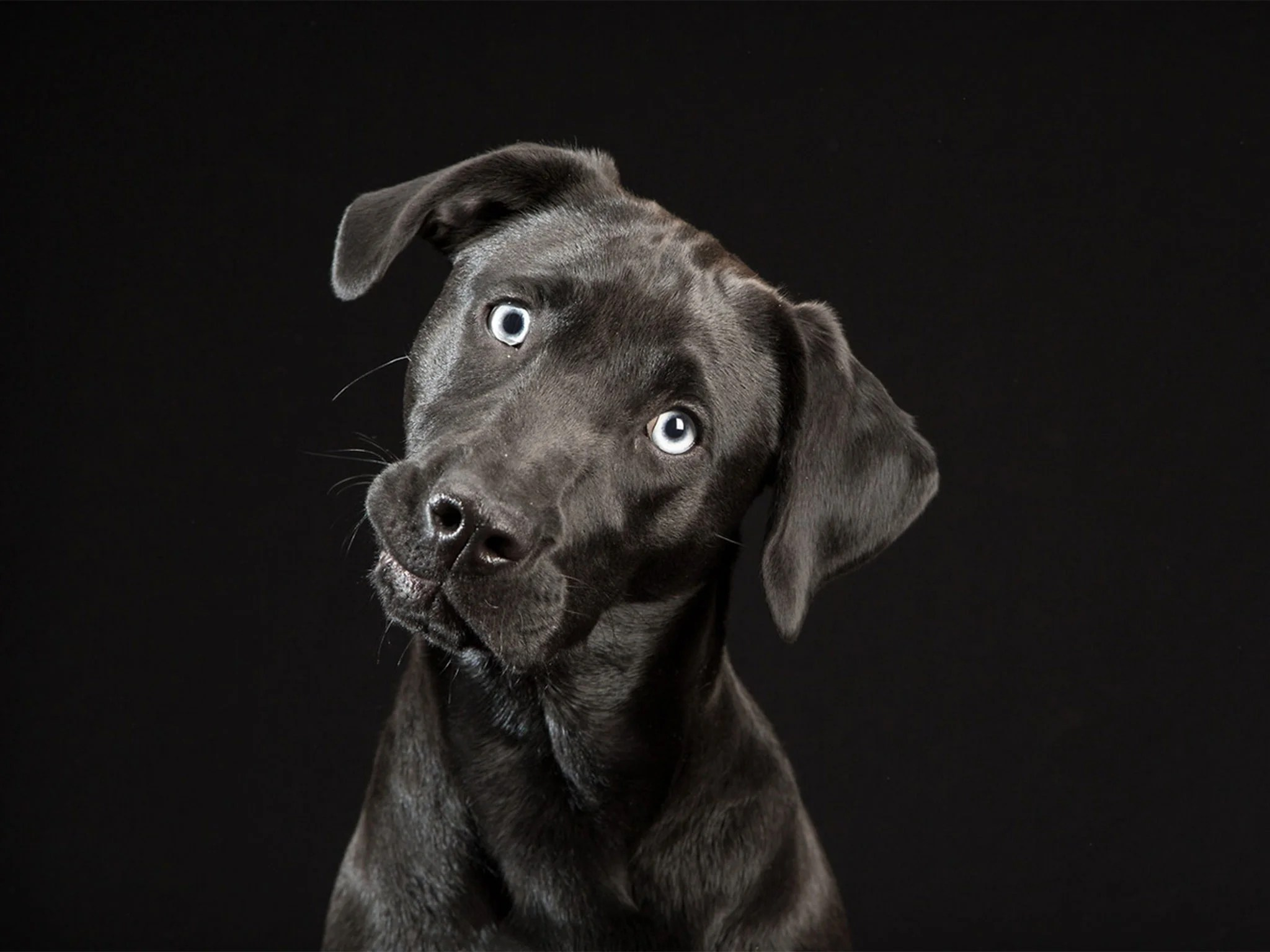 Black Lab Fall Wallpaper Black Dogs Project Photographer Unveils Gallery Of Dark