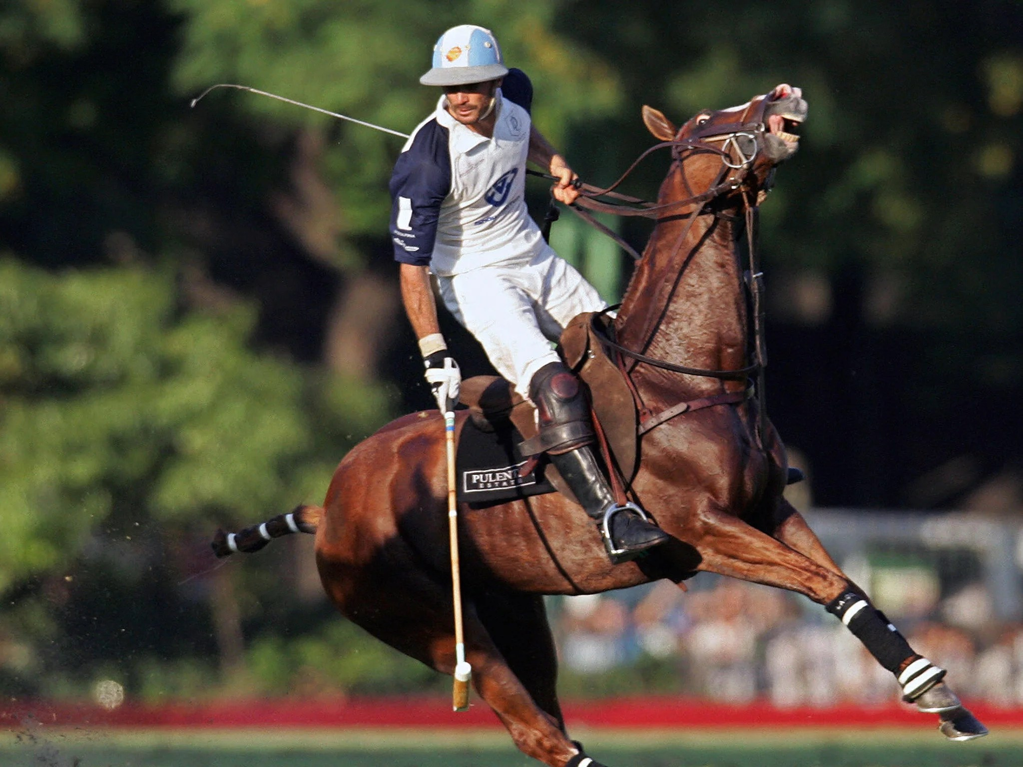 Polo Wallpaper For Iphone Polo Pony Cloning Is Set Revolutionise The Sport At