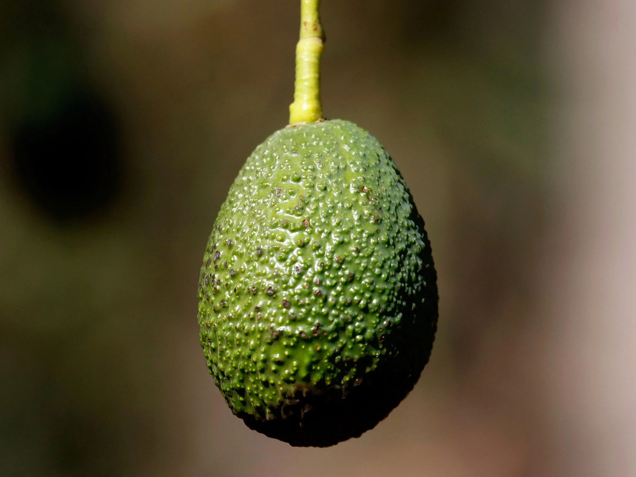 Avocado Boom Pinterest Avocados Revealed As The Most Pinned Food Trend On The