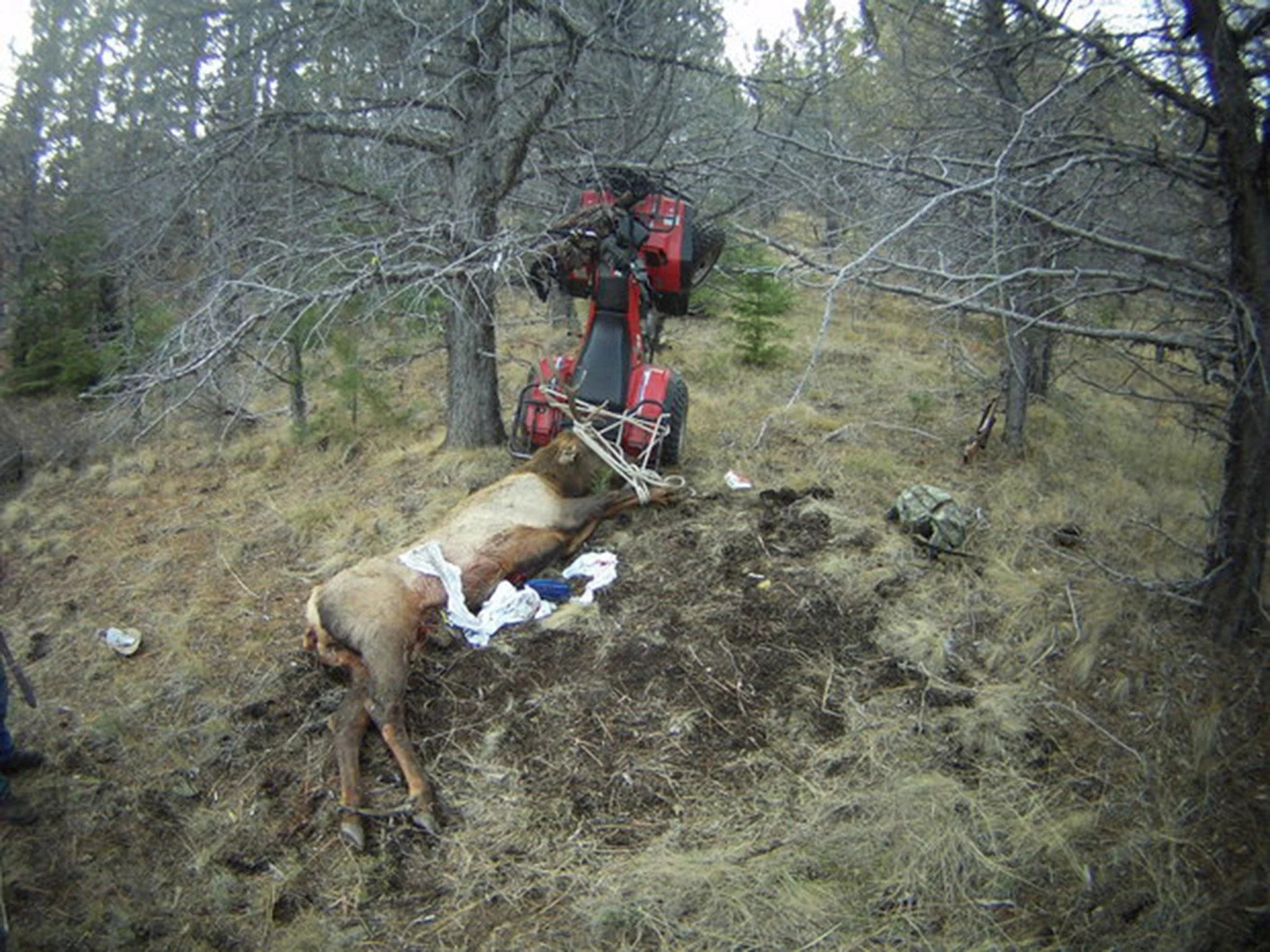 Formula 1 Girl Wallpaper Hunter Gets Impaled By Elk He Just Killed The Independent