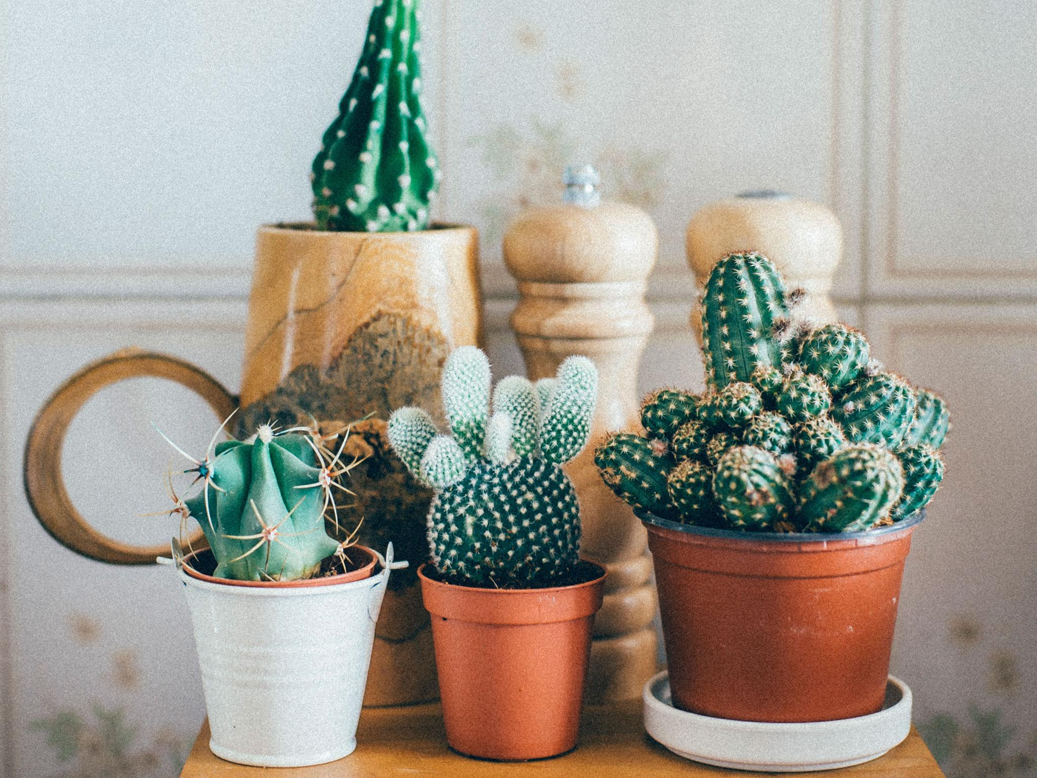 Unusual House Plants For Sale Millennials Are Obsessed With Houseplants Because They Can T