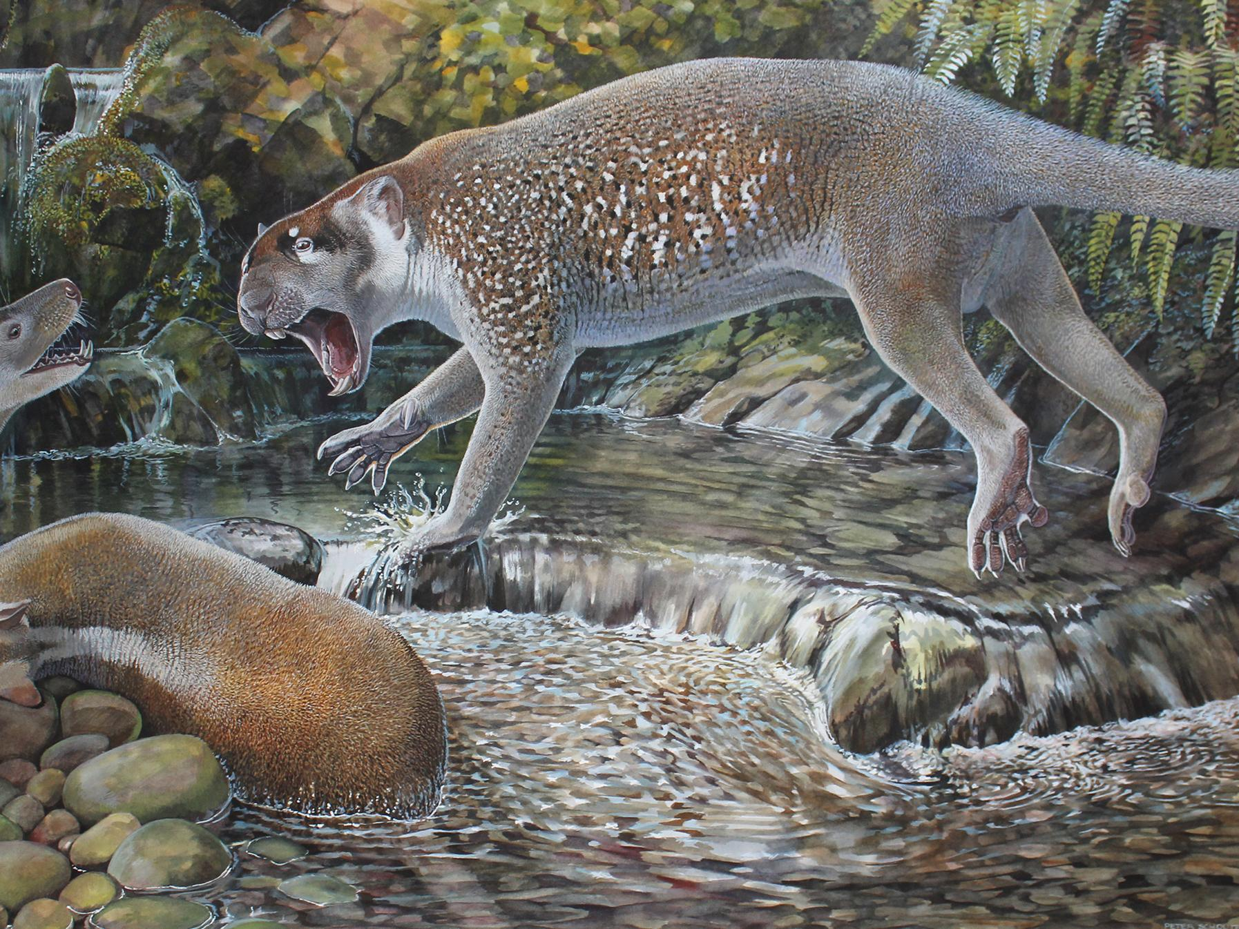 Pet Otter Australia Extinct Kangaroo Like Lion Discovered In Australia The Independent