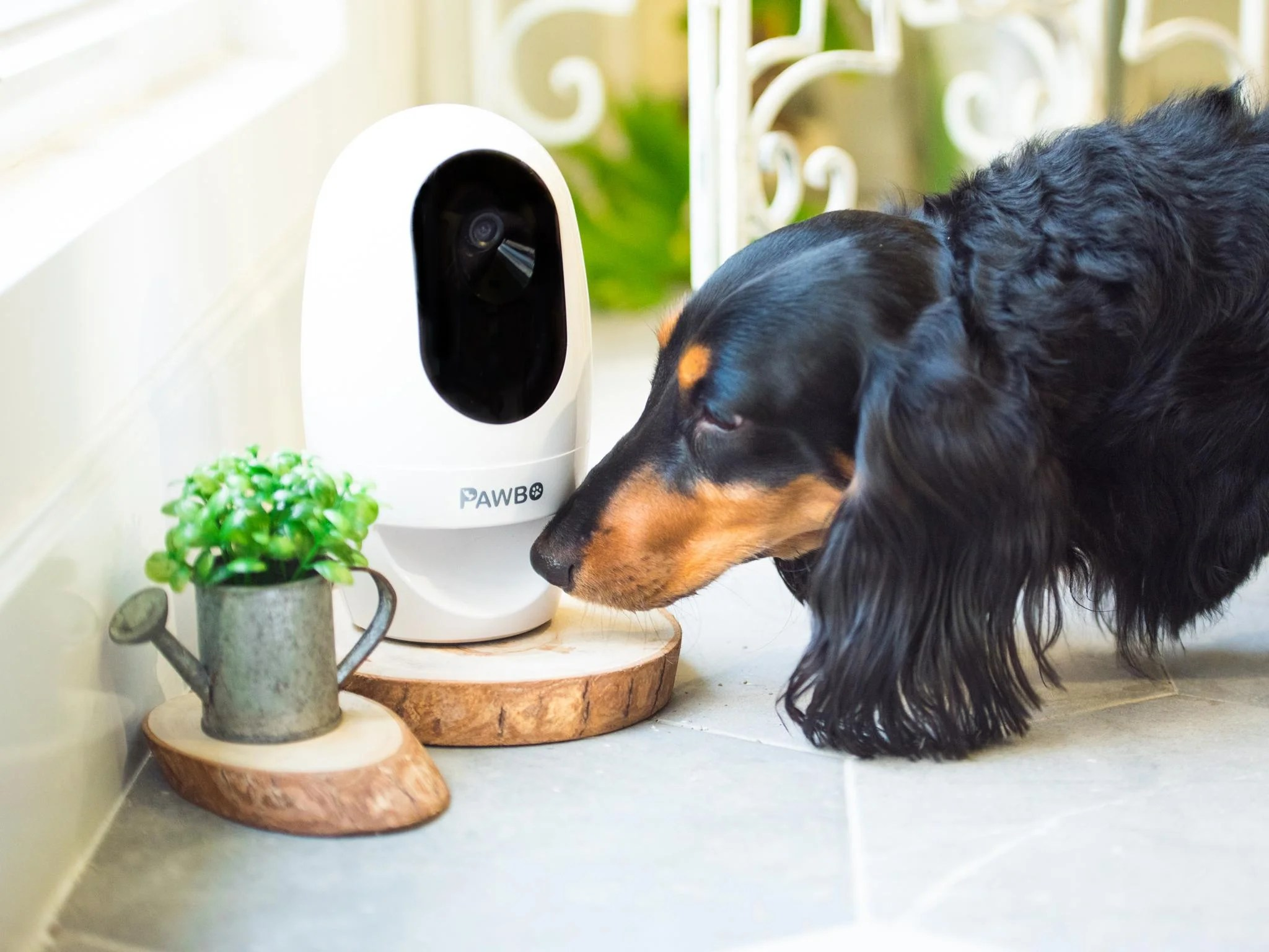 Favorite Pet Cameras Independent Dogs Small Dogs Allergy Sufferers bark post Best Indoor Dogs