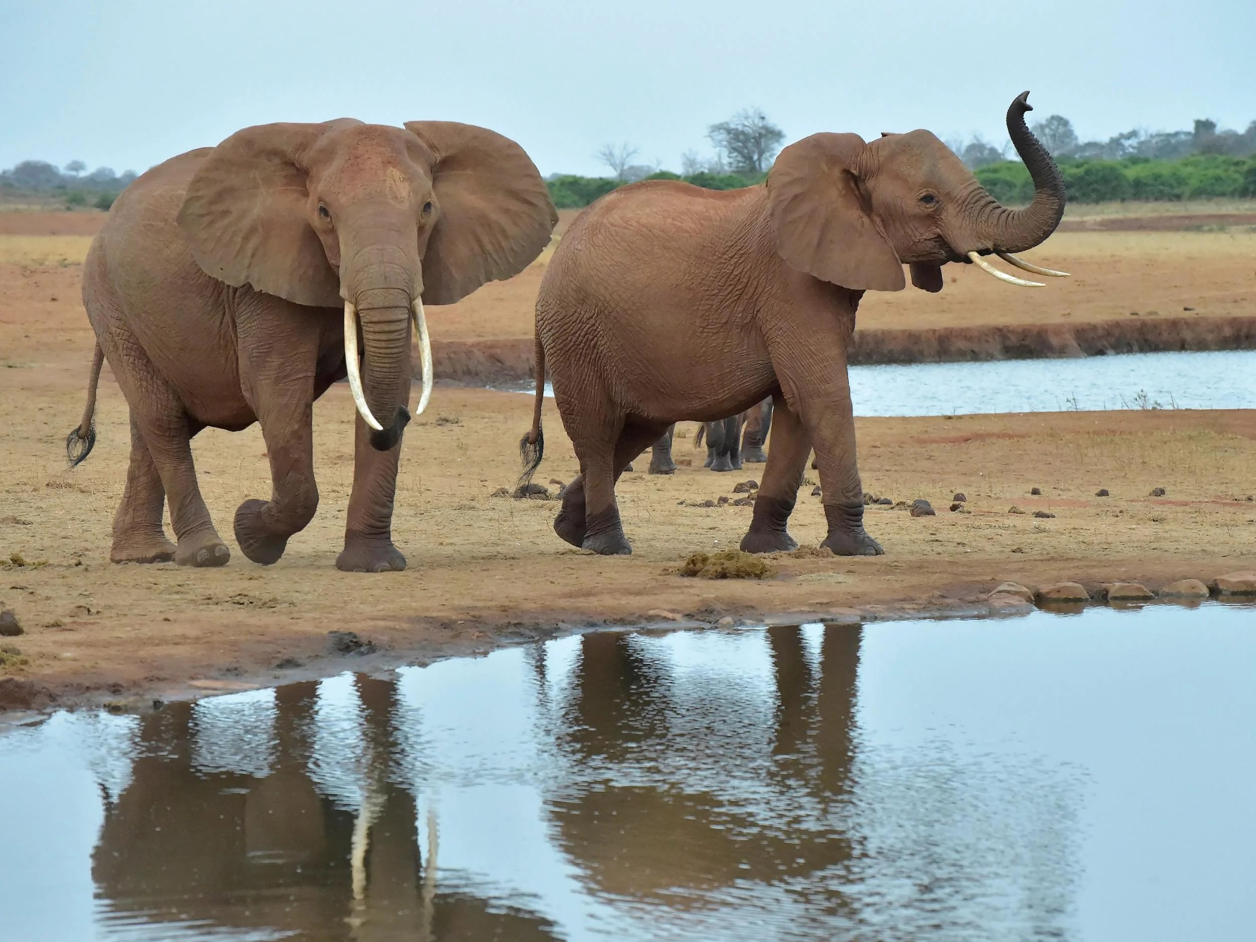 Photos éléphants Elephants Latest News Breaking Stories And Comment The