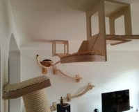 Goldtatze: Wall and Ceiling Cat Furniture
