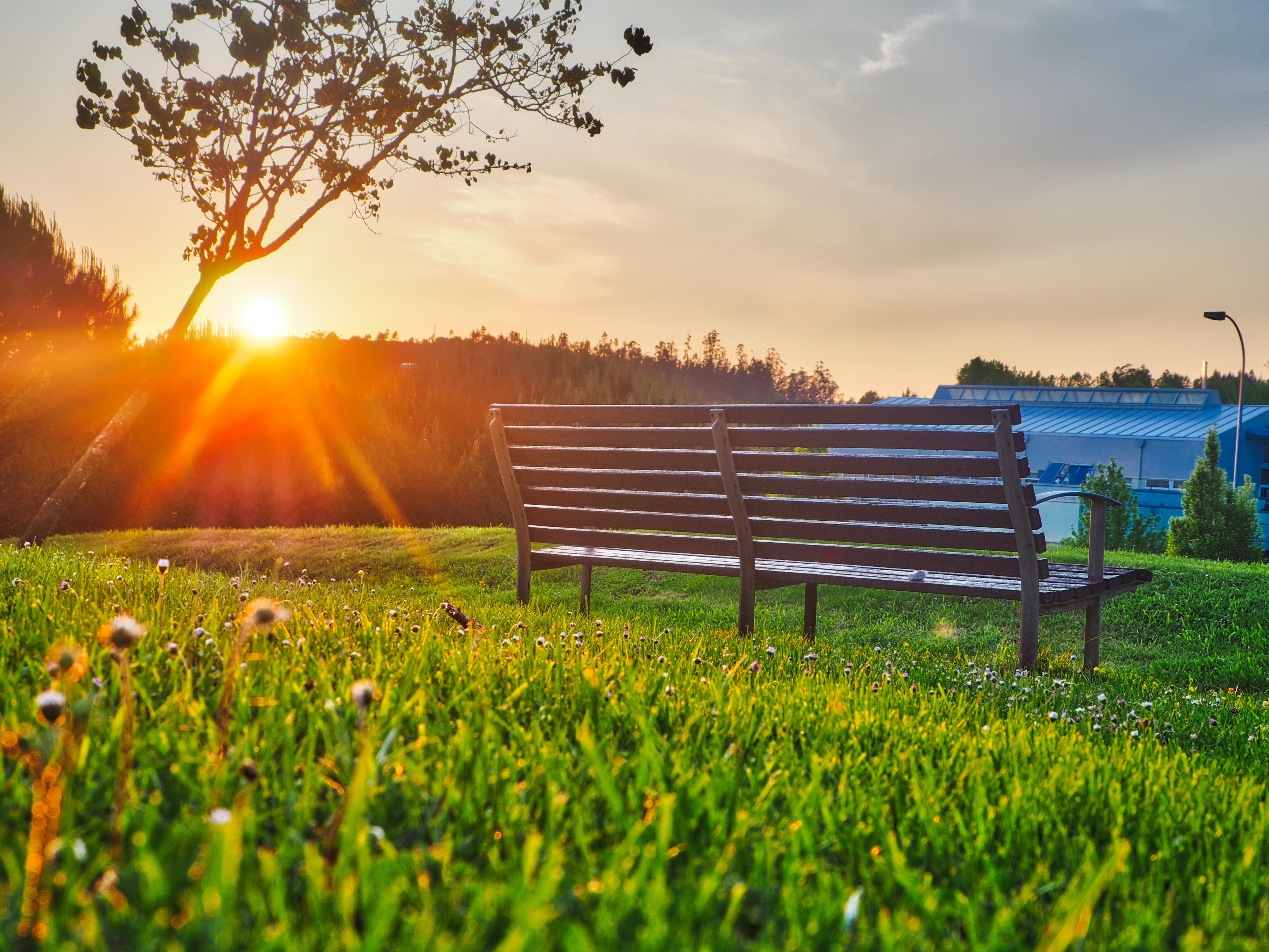 Fall Sunrise Wallpaper Brown Bench On Green Grass 183 Free Stock Photo