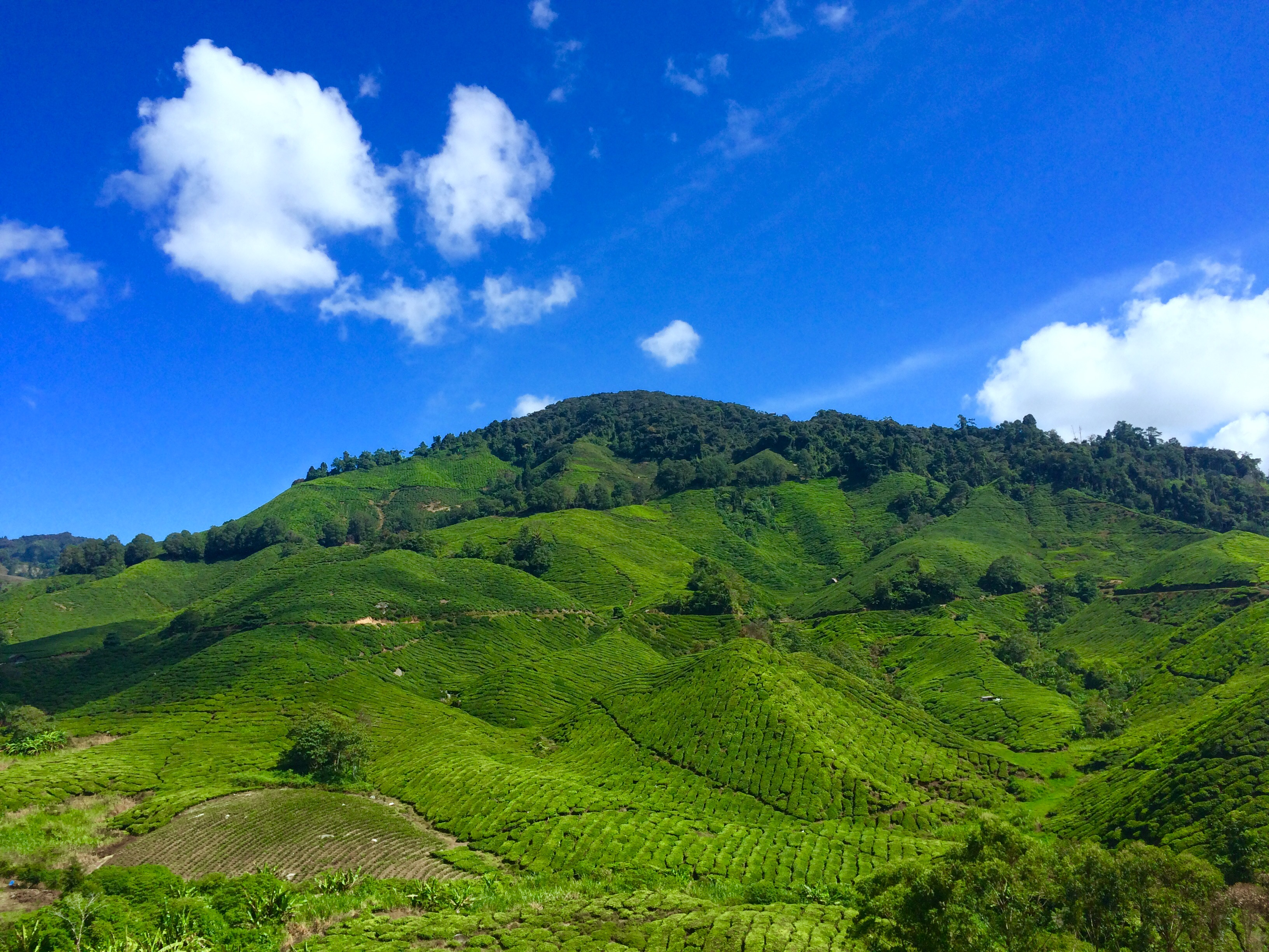 Apple Iphone X Wallpaper From Commercial Landscape Photography Of Green Hill Under Blue Sky And