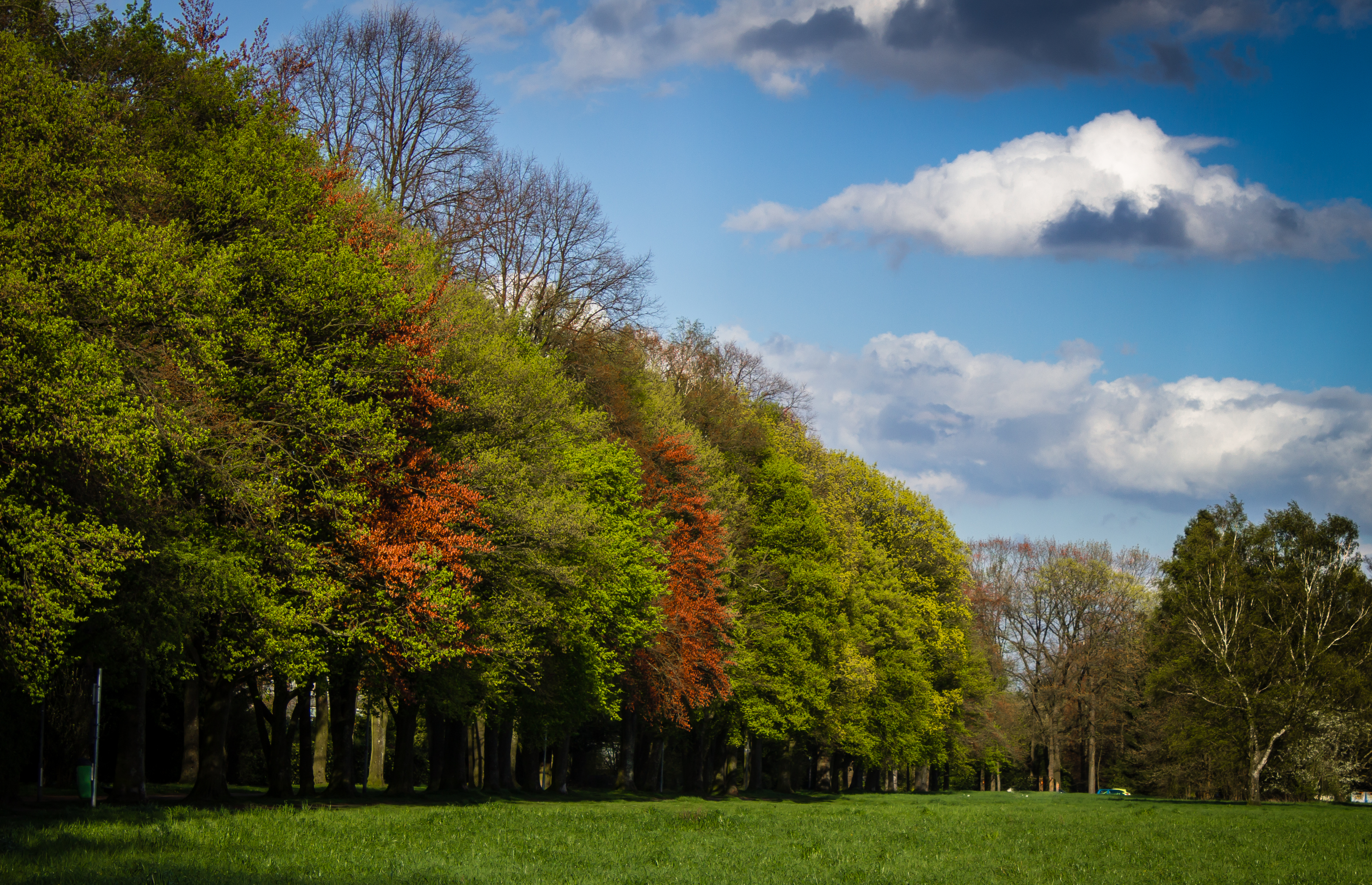 Fall Cartoon Wallpaper Green And Red Tress Under Blue Sky And White Clouds During
