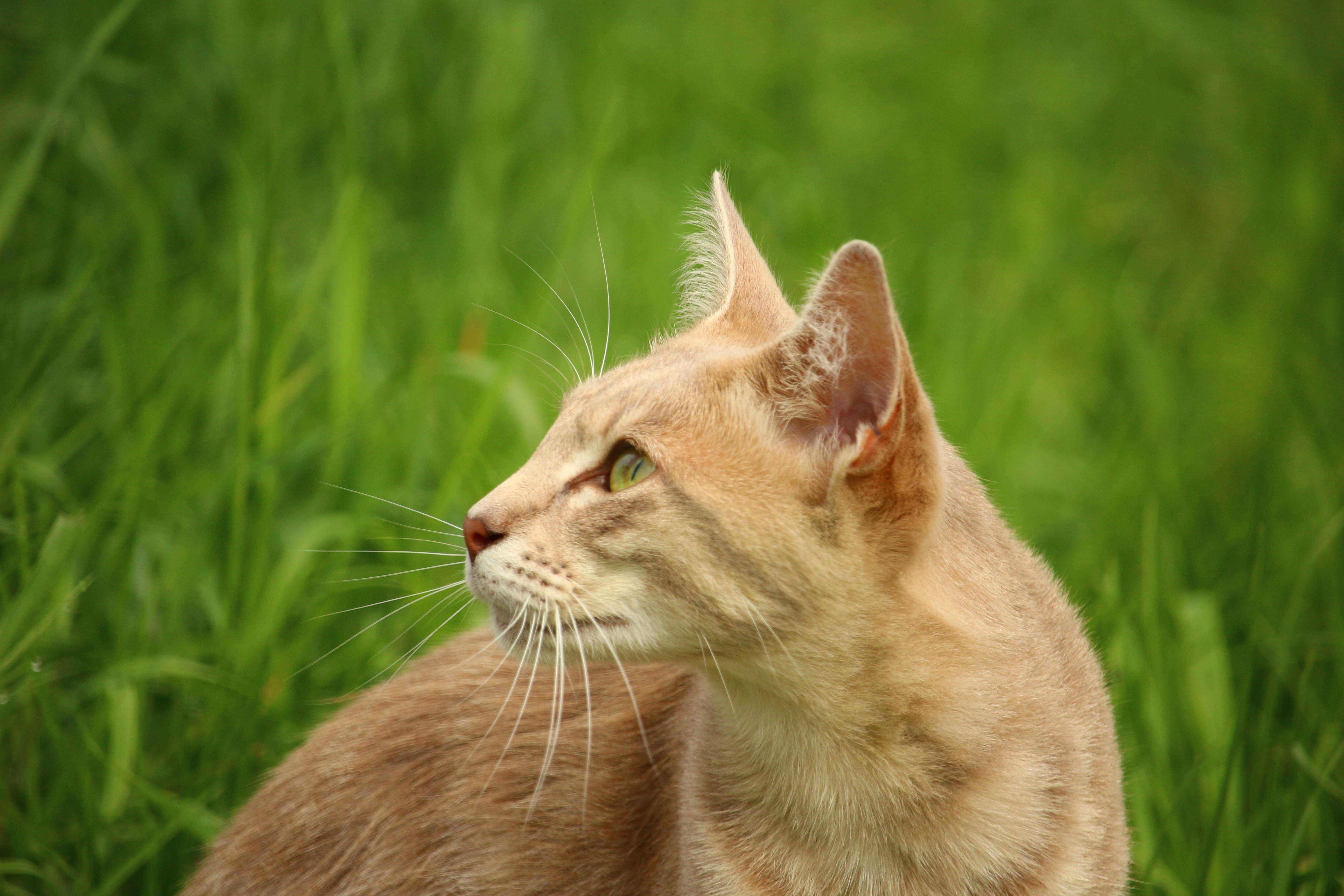 Cute Animal Wallpapers Free Download Tan Cat Beside Green Grass During Daytime 183 Free Stock Photo