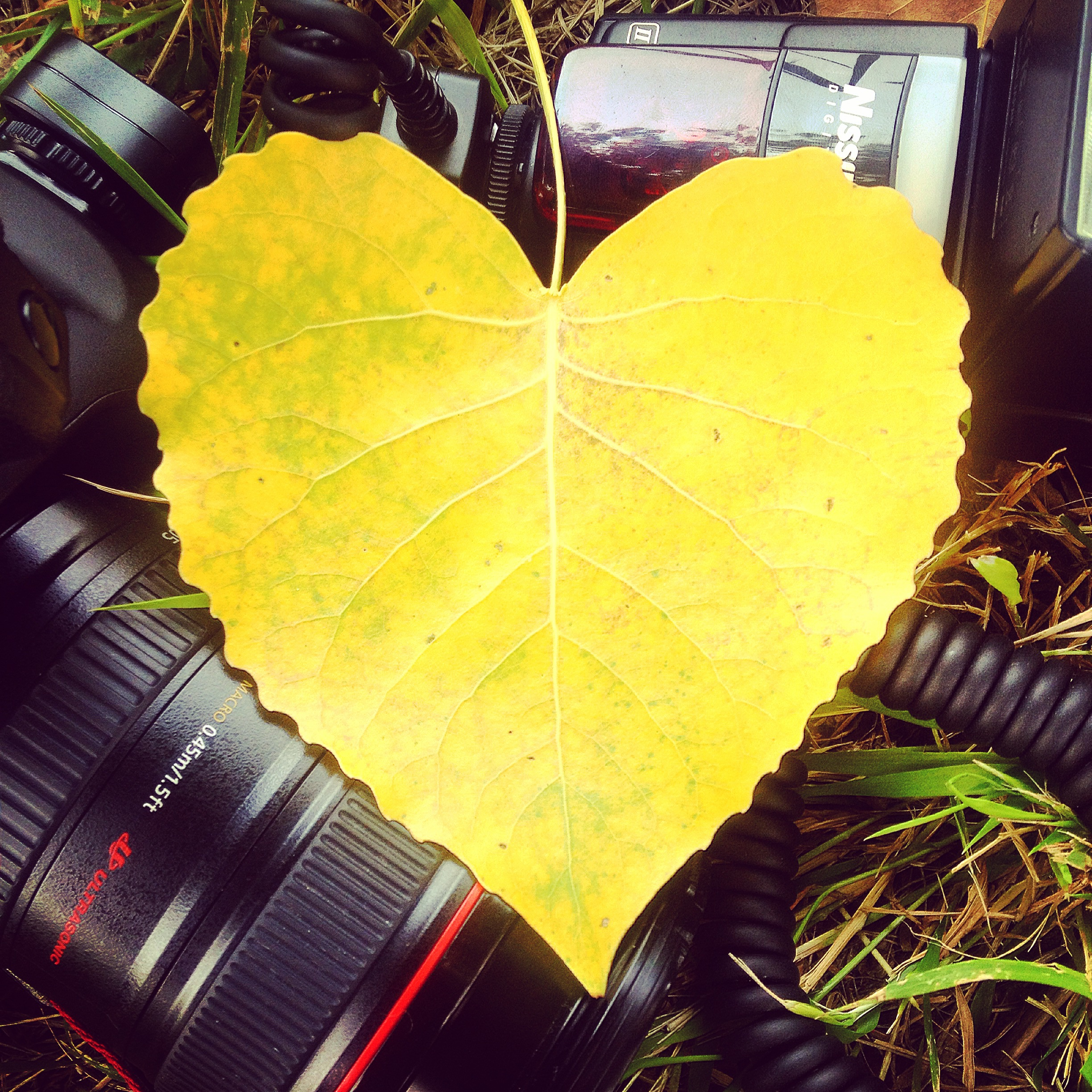 Fall Wallpapers For Iphone 4 Free Stock Photo Of Canon Flash Foliage
