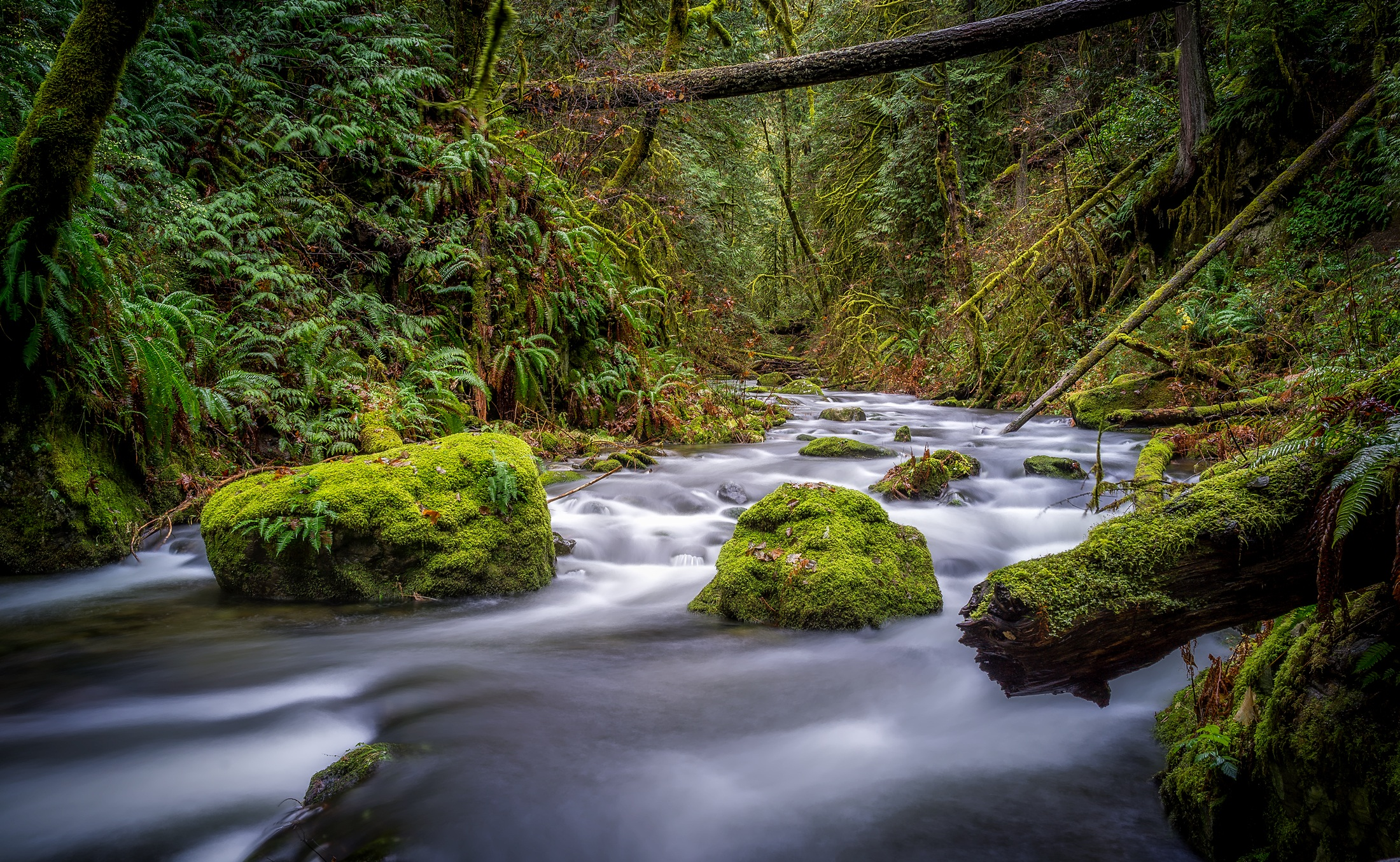 Fall Pictures For Wallpaper Free Free Stock Photo Of Beautiful Country Creek