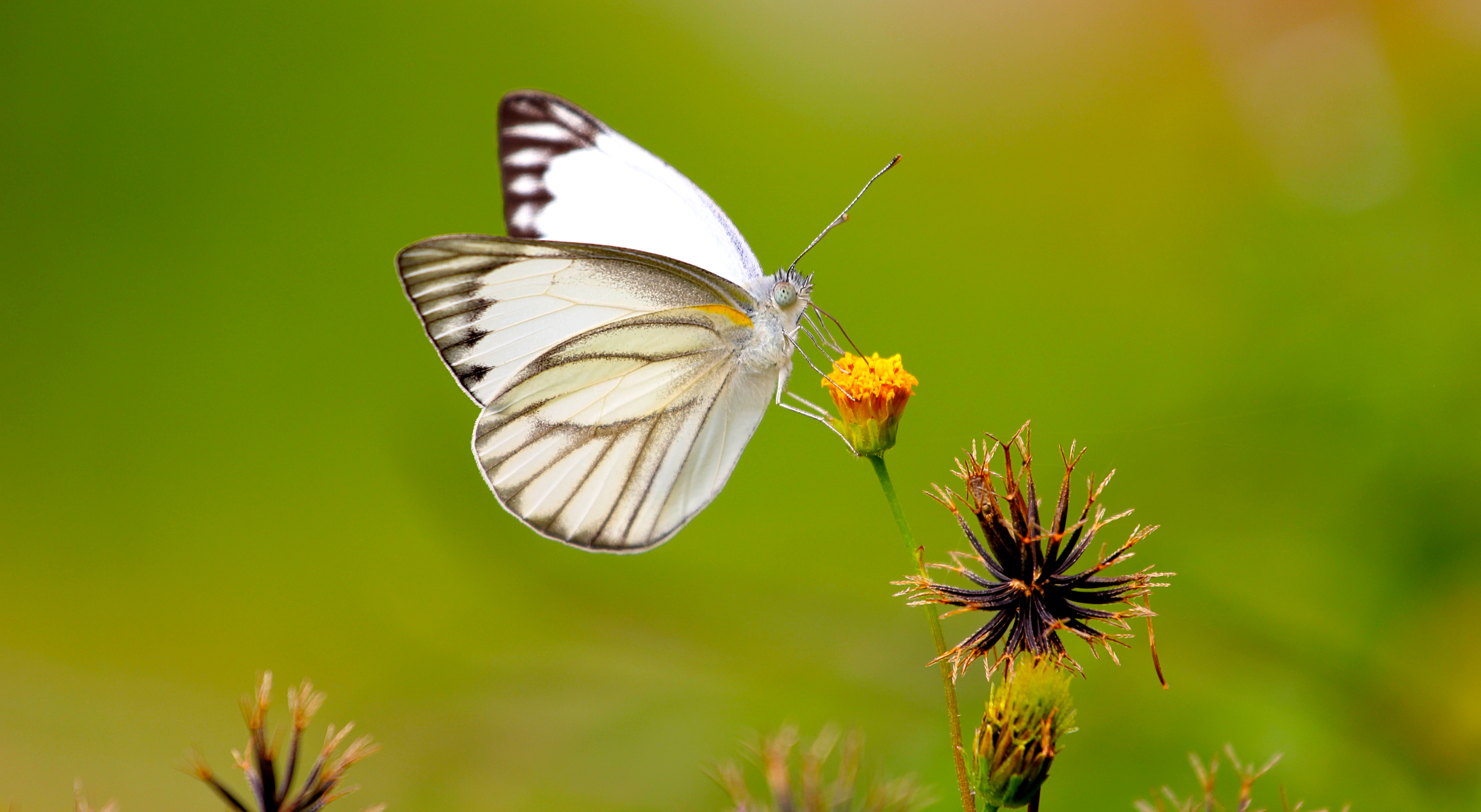 Cute Nature Wallpapers Free Stock Photo Of Animal Antenna Biology