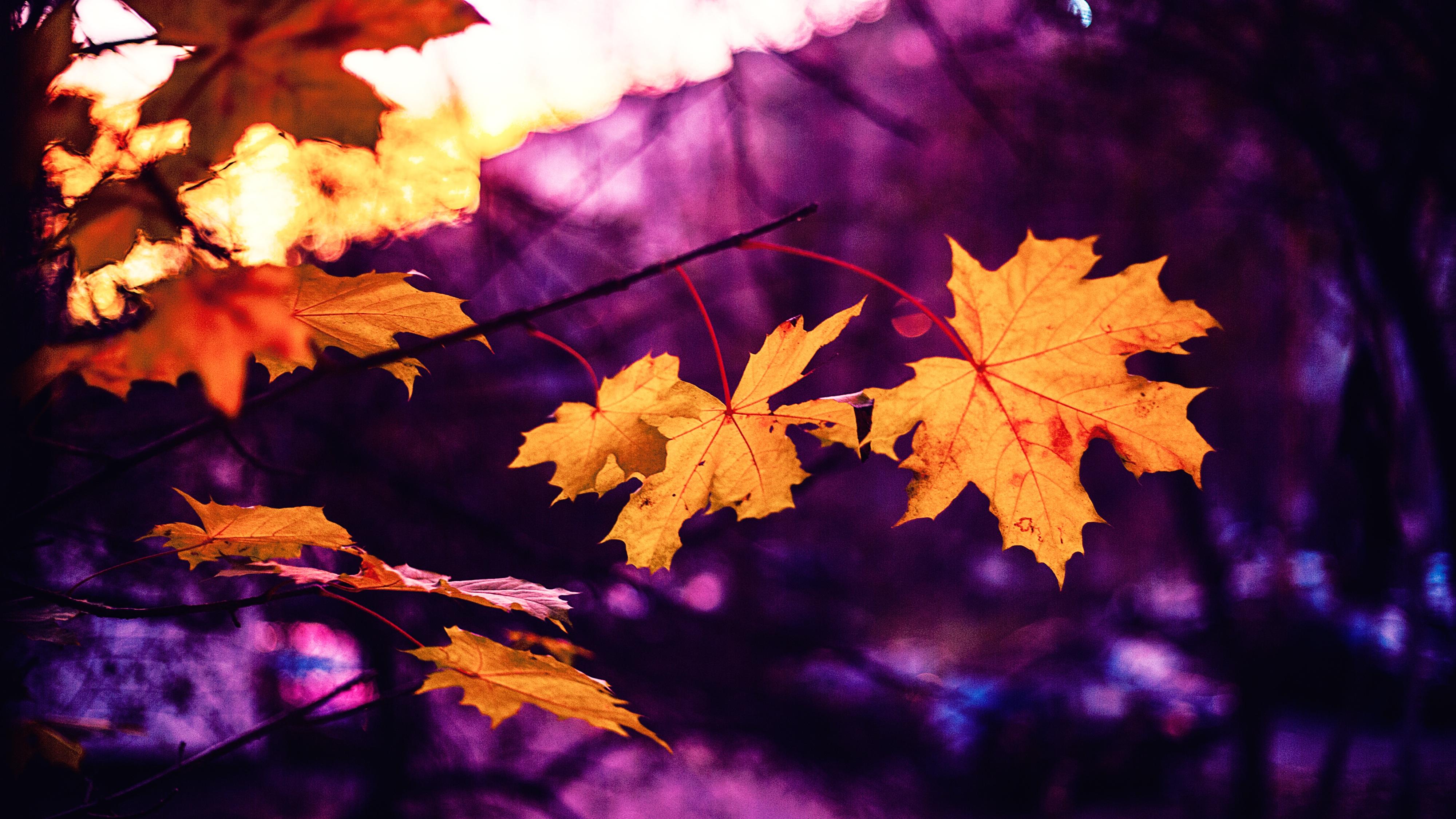 Beautiful Fall Wallpapers Free Stock Photo Of Autumn Autumn Leaf Autumn Leaves