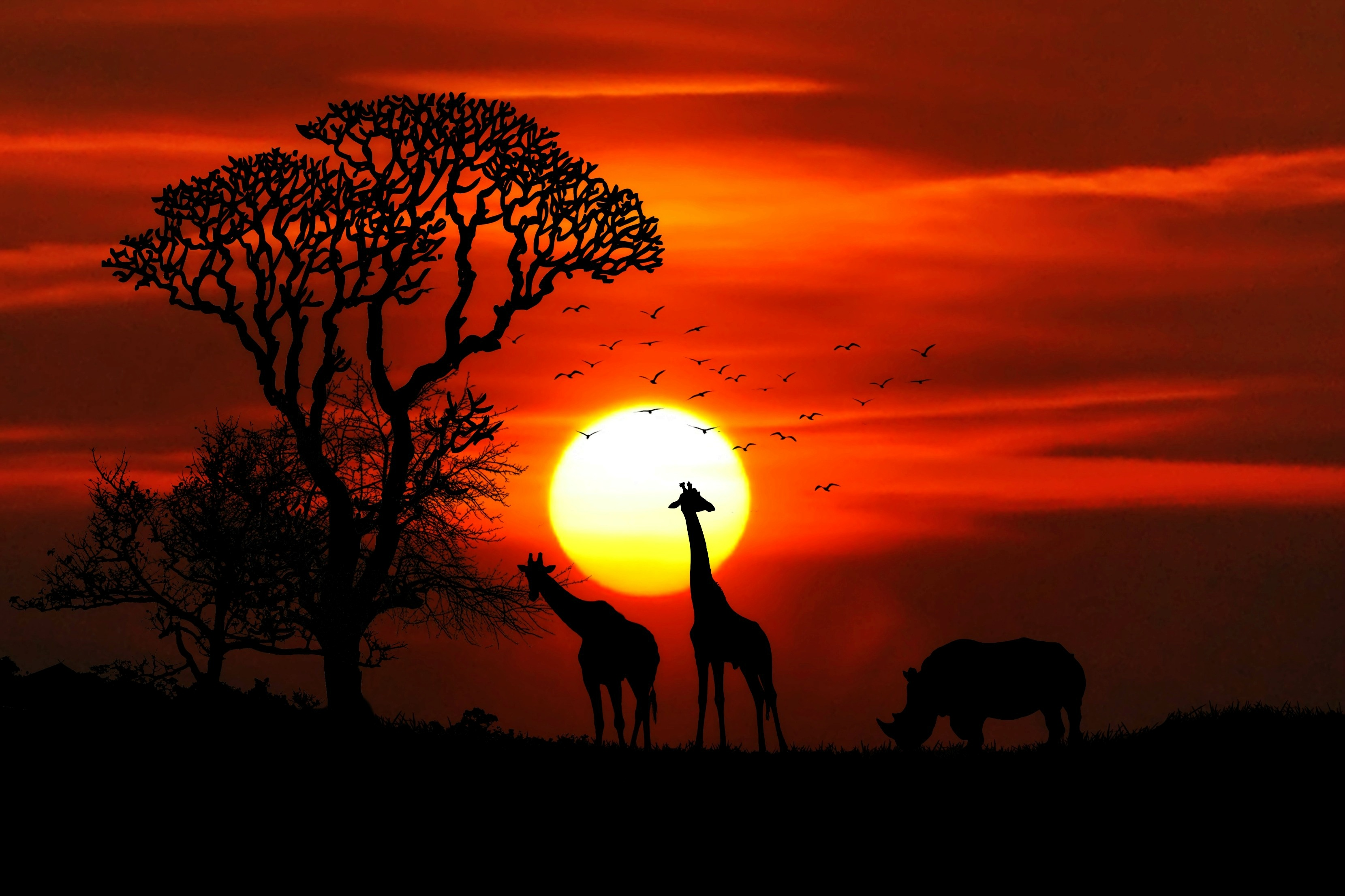 Safari Animal Wallpaper Free Stock Photo Of Animals Birds Dawn