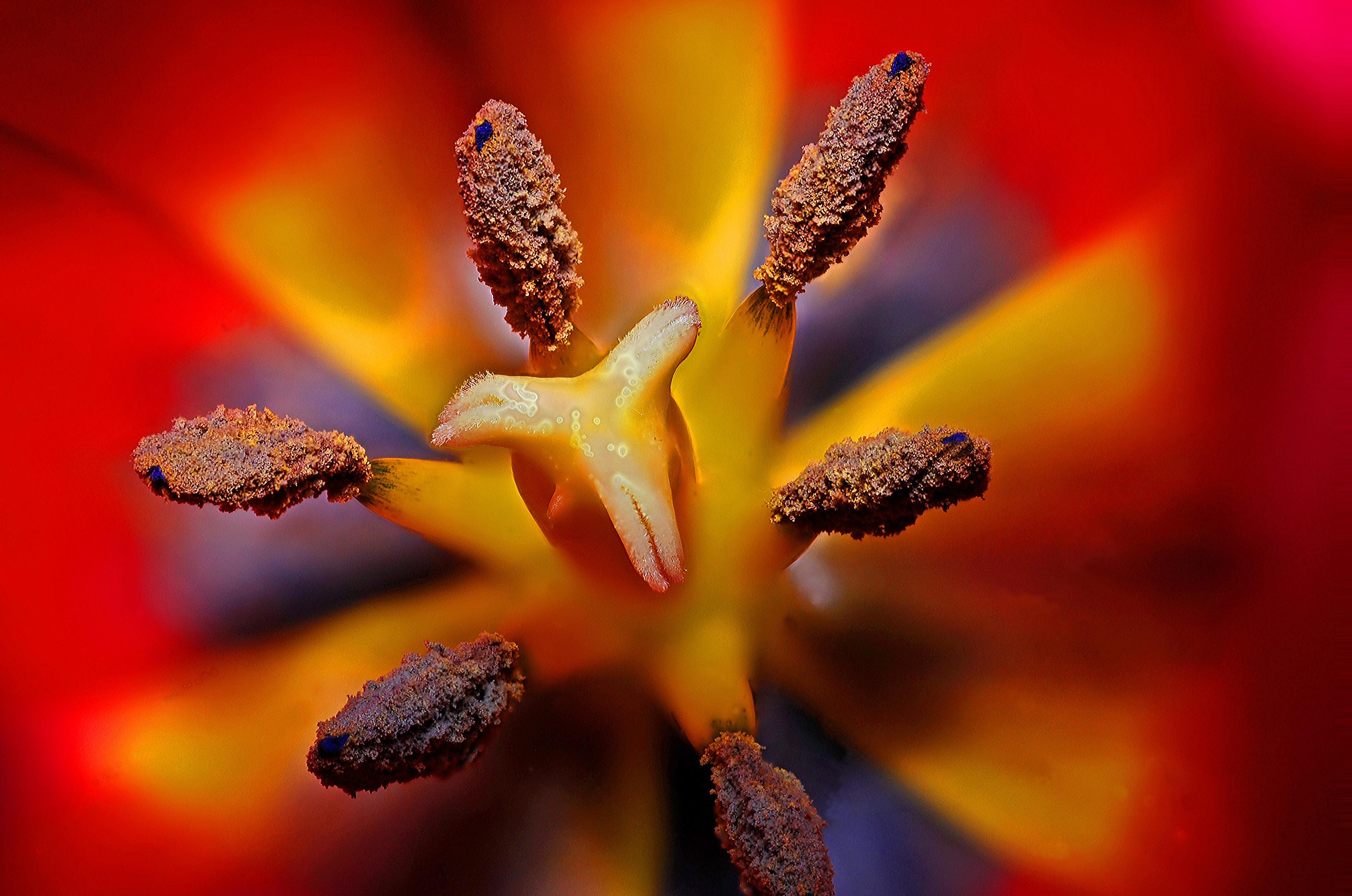 Black Floral Wallpaper Black Yellow And Red Flower Stigma In Tilt Shift Lens