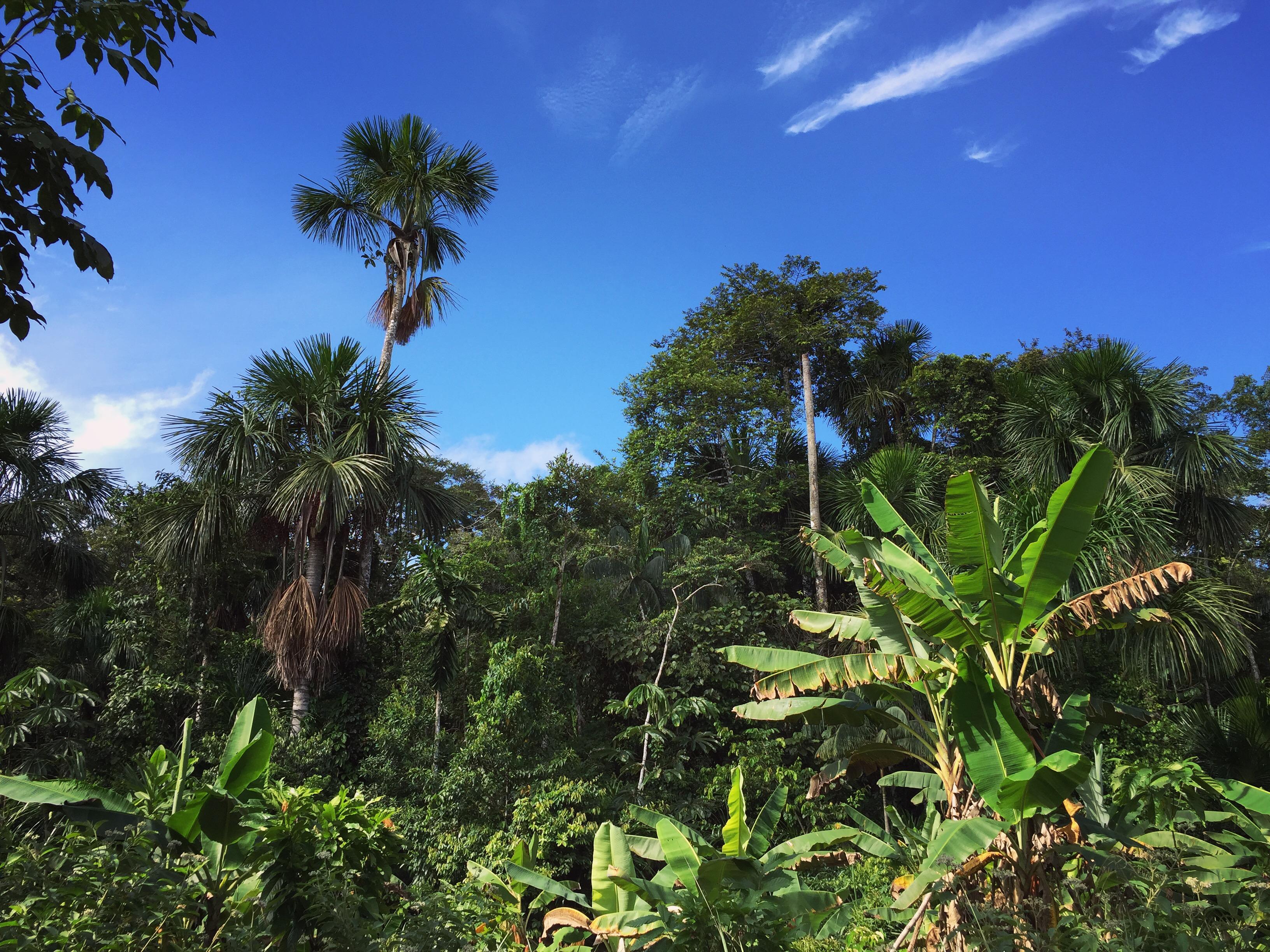 Iphone 6 Beach Wallpaper Free Stock Photo Of Amazon Rain Forest Amazonian Jungle